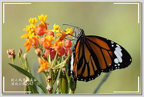 湿地公园的蜻蜓与蝴蝶