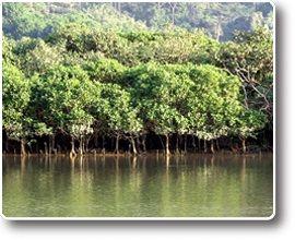 大澳紅樹林