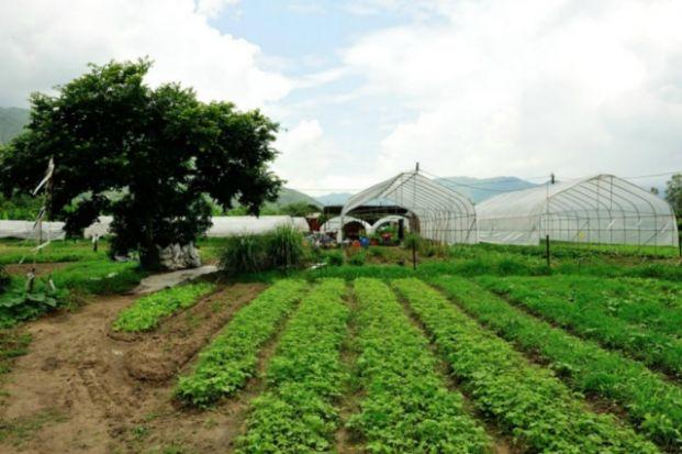 歐羅有機農場