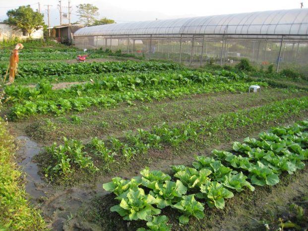 樂樂有機農場