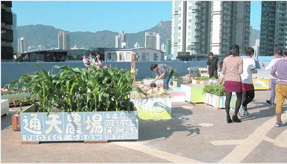 參觀通天菜園@土瓜灣--Project Grow 城巿農場計劃