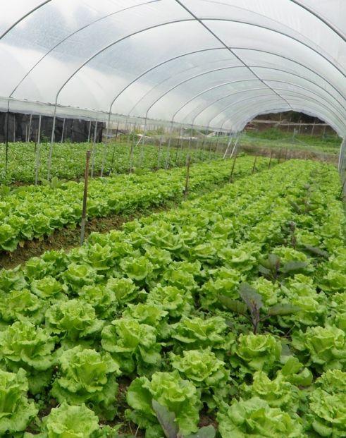 香港有機農場 Hong Kong Organic Farm