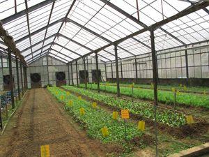 香港青年協會有機農莊
