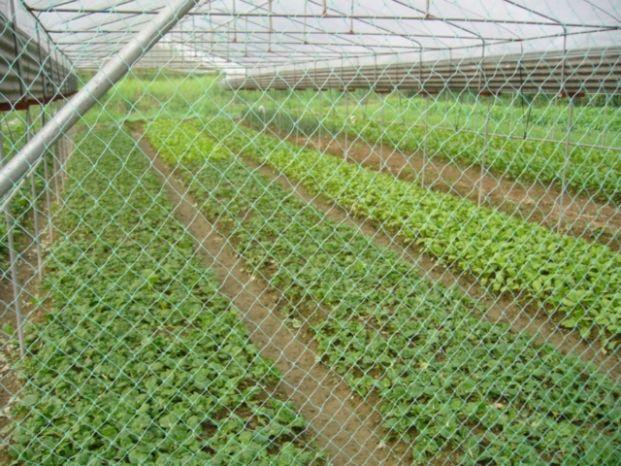 健康有機農場