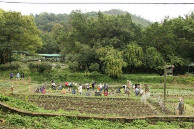 綠田園基金有機農場