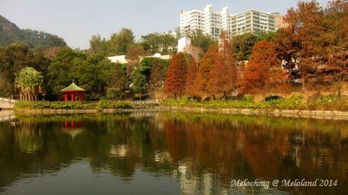 香港 紅葉 好介紹