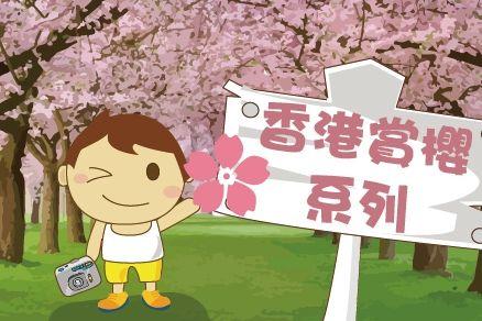 香港賞櫻 系列