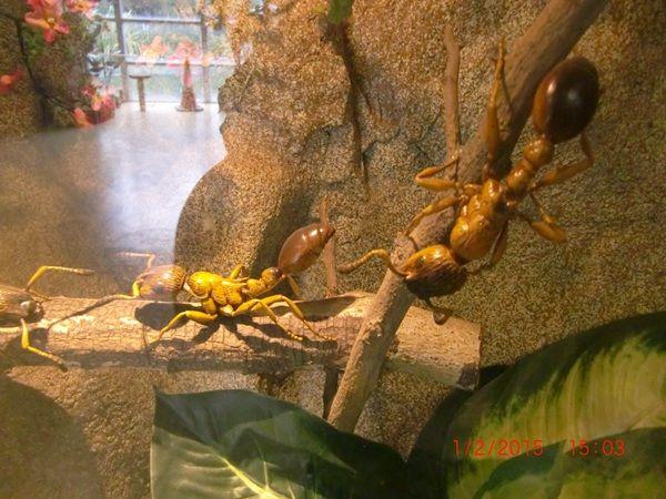 大埔海濱公園昆蟲屋