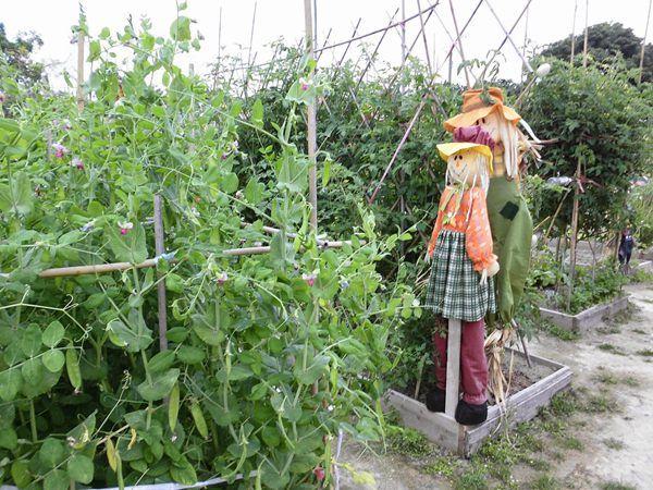 綠豆豆農莊