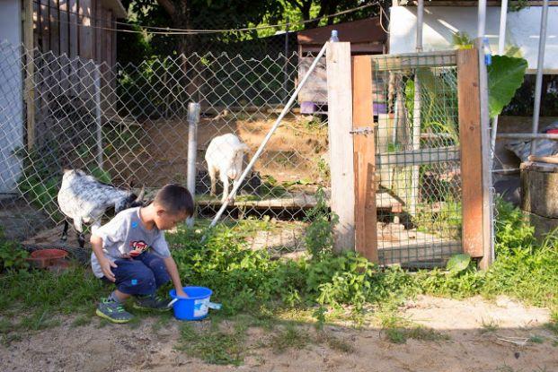 開心農場 Happy Farm