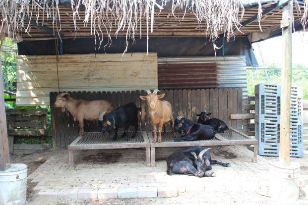 元朗小澤農場