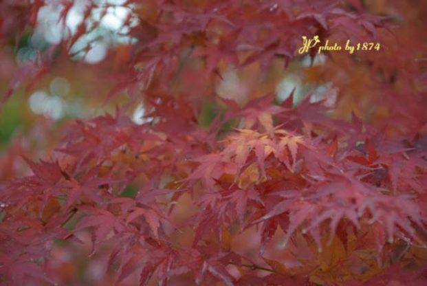 嵐山 (京都)