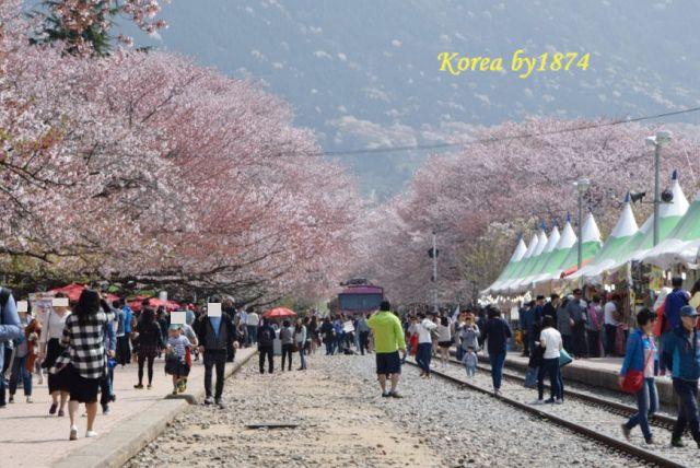 慶和站櫻花路(南韓)